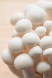 Beech mushrooms Royalty Free Stock Photography