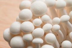 Beech mushrooms Stock Photos