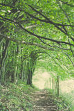 Beech path Stock Images