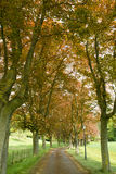 Copper Beech Path Royalty Free Stock Photos