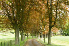 Beech Path in Spring Royalty Free Stock Photography