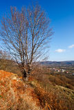Beech tree Stock Images