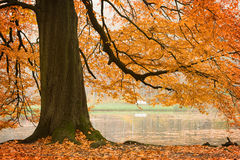 Beech tree Stock Photo
