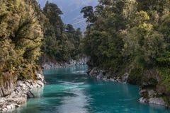 Beech tree forest around Hokitika gorge in New Zealand Stock Images