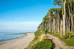 Beech tree forest at the Baltic Sea Stock Photography