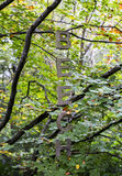 BEECH tree Stock Photography