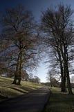 Beech trees aDisley, Stockport, Darbyshire Englandgainst blue sky Lyme Park. Beech trees a Disley, Stockport, Darbyshire Englandgainst blue sky Lyme Park Stock Image