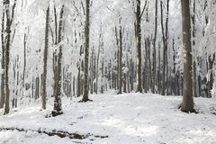 A frozen winter forest at dawn