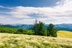 Beech trees on the edge of a grassy hill. Gorgeous cloudscape above grassy meadow. mountain ridge with alpine meadows in the distance. wonderful sunny day and Stock Images