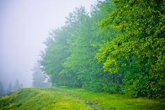 Beech trees in fog Royalty Free Stock Photos