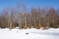 Beech trees forest in north of Italy in winter Stock Images