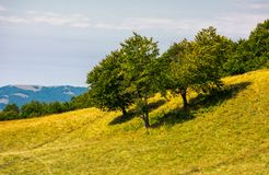 Beech trees on a grassy hill. Lovely scenery with distant mountain Royalty Free Stock Image