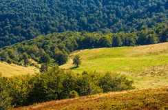 Beech trees on hillside meadow in autumn. Beech trees on hillside meadow. beautiful natural background in autumnal fine weather Royalty Free Stock Photography