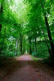 Beech trees leaves woods spring arboretum Heverlee, Leuven, Belgium stock images