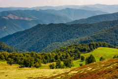 Beech trees meadow on hillside in autumn Stock Image