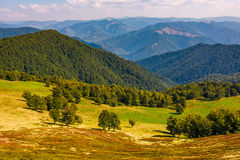 Beech trees meadow on hillside in autumn. Beech trees meadow on hillside with mountain ridge in a distance. lovely autumnal landscape in mountains with fine Stock Photo