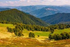Beech trees meadow on hillside in autumn Stock Photo