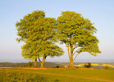 Beech trees on the Quantock Hills in Somerset Royalty Free Stock Photos