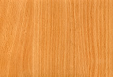 Beech Wood Background Stock Photo