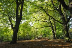 Beech wood litter on a sunlit summer day Stock Photography