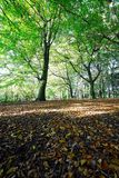 Beech wood litter on a sunny summer day Royalty Free Stock Images