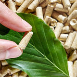 Beech wood pellets Royalty Free Stock Photo