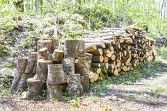 Beech wood pile of firewood. Stock Images