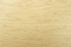 Beech wood texture Stock Photography