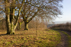 Beech woodland with footpath Stock Photos