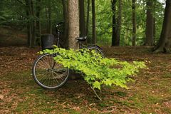 Beeches and a bike in the park in spring. Beeches and a bike is standing against the trunk of the beech in the park in spring Stock Photo