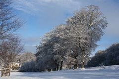 Beeches in Winter - 2 Stock Photo