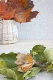 Beechnut twig, prickly empty husk. Stock Image