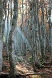 In beechwood in de Herfst royalty-vrije stock fotografie