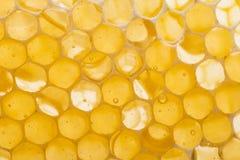 Beecombs con la miel Imagenes de archivo
