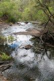 Beedelup国家公园,西澳州 免版税库存照片