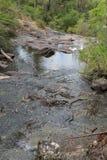 Beedelup国家公园,西澳州 免版税库存图片