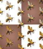 Beees vektor abbildung