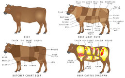 Beef chart Royalty Free Stock Photography