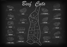 Beef cow bull side carcass cuts cut parts infographics scheme si Stock Images