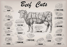 Beef cow bull whole carcass cuts cut parts infographics scheme s. Ign signboard poster butchers guide: neck, chunk, brisket fillet rump. Vector beautiful Royalty Free Stock Photography