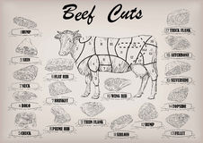 Beef cow bull whole carcass cuts cut parts infographics scheme s. Ign signboard poster butchers guide: neck, chunk, brisket fillet rump. Vector beautiful Royalty Free Stock Images