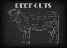 Beef cow bull whole carcass cuts cut parts infographics scheme s Royalty Free Stock Photography