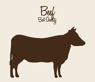 Beef cow. Design, vector illustration eps10 graphic Stock Photos