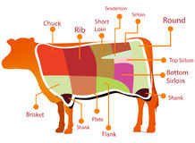 Beef cutting chart. On white Stock Photo