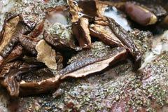 Beef goulash. Stock Photography