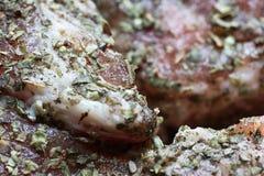 Beef goulash. Stock Image