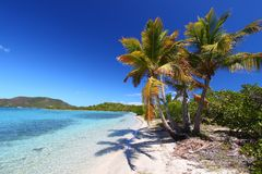 Beef Island Beach (BVI). Palm trees on the beach of Beef Island - British Virgin Islands Stock Image
