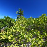 Beef Island - British Virgin Islands Stock Photo