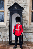 Beefeater stock photography
