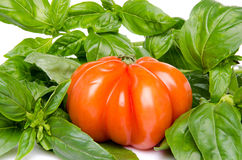 Beefsteak tomato with basil Royalty Free Stock Photo